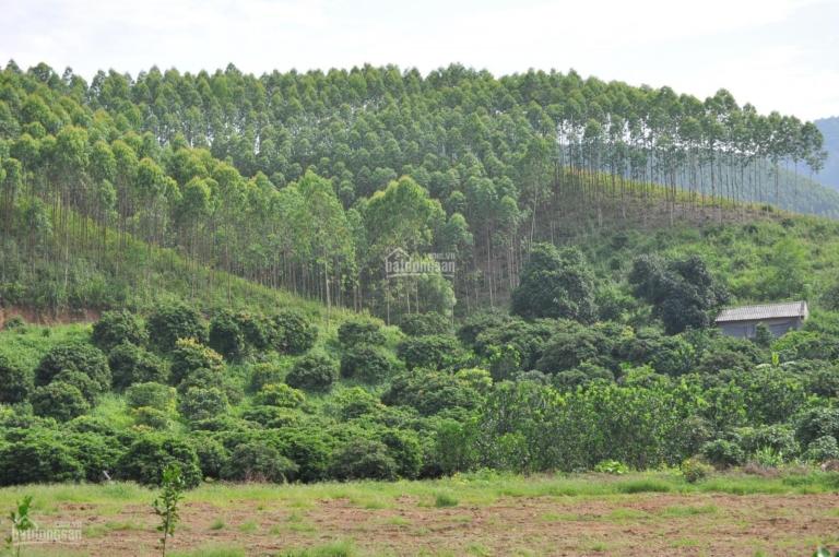 Có nên mua đất rừng sản xuất không